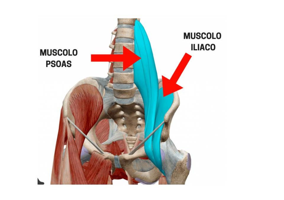 L'importanza dell'ileo-psoas